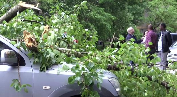Around 14,000 trees were fell during the storm (AP)