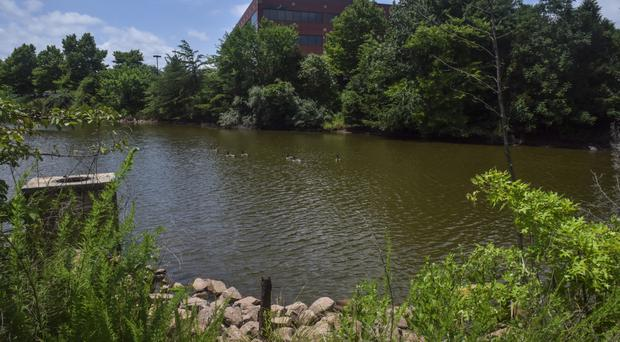 The pond where the body of the teenage Muslim girl was found in Sterling, Virginia (Washington Post/AP)