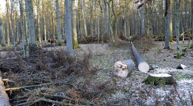 Poland 'glad' to defend logging in ancient forest before European Union court