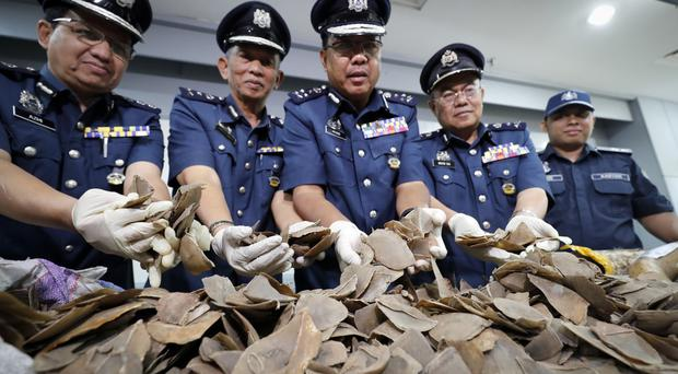 Pangolin scales seized by Malaysian customs officials in a warehouse at Kuala Lumpur airport (AP Photo/Vincent Thian)