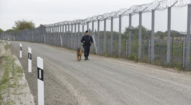 A police officer with a dog patrols along the border fence on the Hungarian-Serbian border