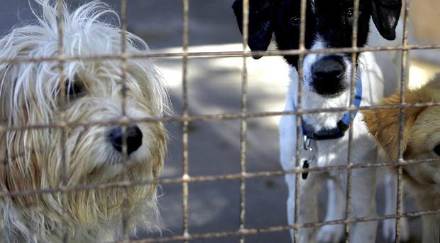 'Stray dogs are at risk of being put down by local authorities after seven days, as they struggle to care for the numbers that are picked up on the streets every day' (stock photo)