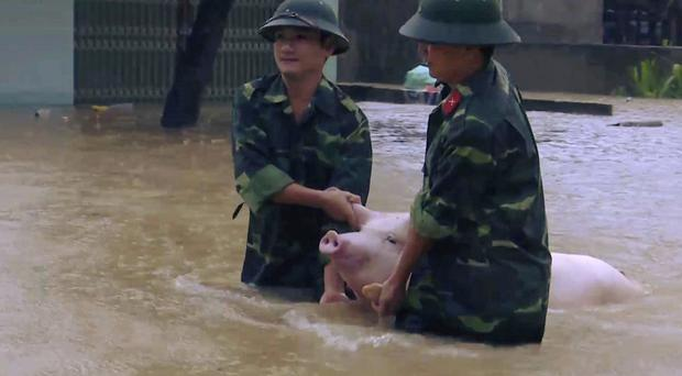 Two soldiers walk a pig through flood water in northern province of Thanh Hoa, Vietnam, Wednesday (Trinh Duy Hung/Vietnam News Agency via AP)