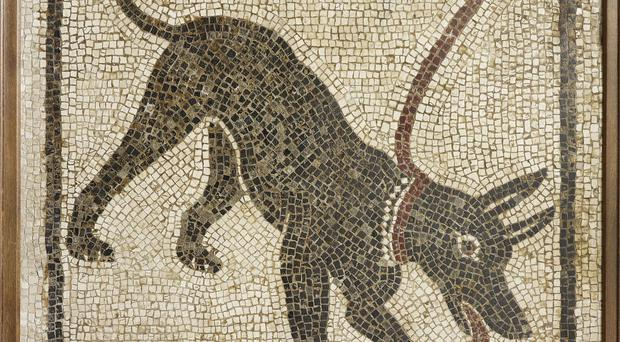 A mosaic of a dog from Pompeii