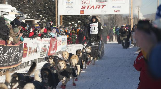 Dallas Seavey, four-time Iditarod winner (AP)