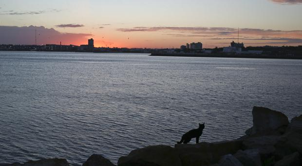 A cat walks on a dock near the Mar de Plata Naval Base, in Argentina (AP)