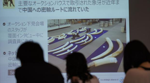 Images of elephant's tusks are seen on a screen at a WWF Japan press conference in Tokyo (AP)
