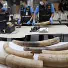 Forensic officers inspect ivory seized in Bangkok, Thailand, originating from Nigeria and destined for China (AP Photo/Sakchai Lalit)
