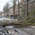 Heavy winds uproot a tree in Amsterdam (Peter Dejong/AP)