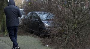 An uprooted tree in Amsterdam (Peter Dejong/AP)