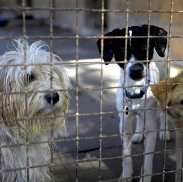 300 stray dogs put down in Northern Ireland in under a year