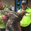 Ecuadorian police officers inspect a bird of prey (Interpol via AP)