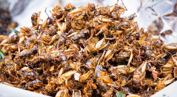 Fried crickets (Somrerk Kosolwitthayanant/Getty Images)