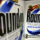 A San Francisco jury has awarded 289 million dollars (£226 million) to a former school groundsman who claimed Monsanto's popular Roundup weed killer contributed to his terminal cancer (AP Photo/Jeff Roberson, File)