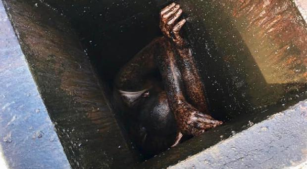 The grease-covered man when discovered by police. (Alameda County Sheriff's Office)