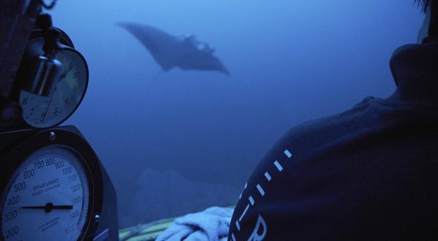 A manta ray swims near the submersible during a dive off the coast of the island of St Joseph in the Seychelles (David Keyton/AP)