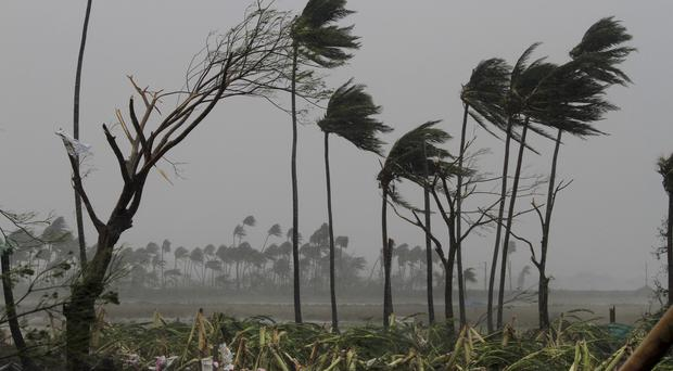 Uprooted trees in Puri district (AP)