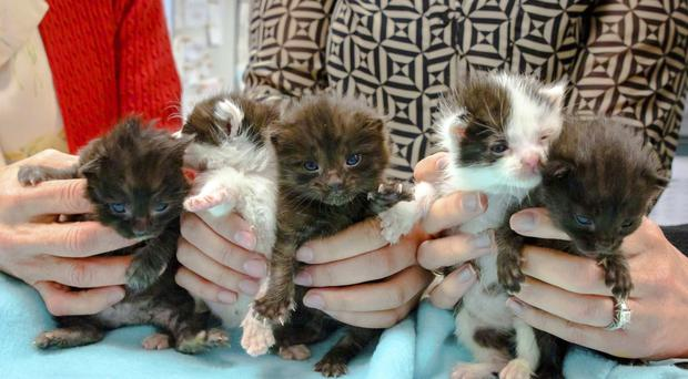 The five kittens stowed away inside a steel column on a 400-mile trip to San Diego (San Diego Humane Society/AP)
