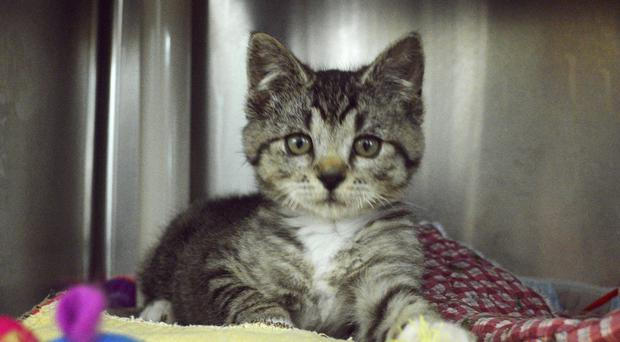 The kitten is set to make a full recovery (Washington County Animal Services/AP)