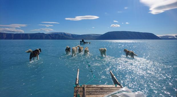 Sled dogs appear to walk on water as they run on melting sea ice (Steffen Olsen/DMI/PA)
