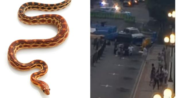 Left, a snake, and right, the woman crashing into barricades (Getty/Greenville Police Department/AP)