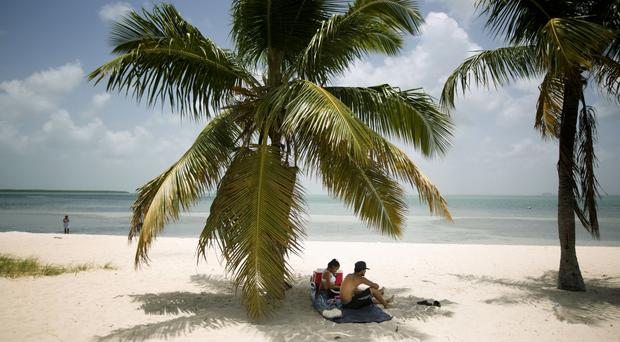 Florida's famous palm trees are under attack from a fatal disease (J Pat Carter/AP)