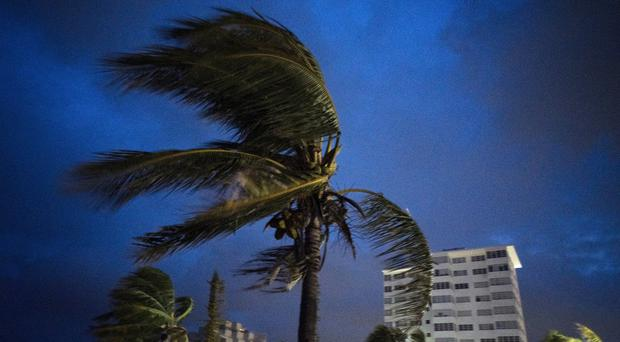 Strong winds move the palms of the palm trees in the Bahamas (AP Photo/Ramon Espinosa)