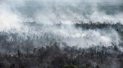 Forest fires in Kahayan Hilir (AP Photo/Fauzy Chaniago)