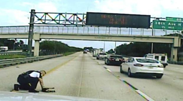 The officer saved the dog on the highway (Pinellas Park Police Department/PA)