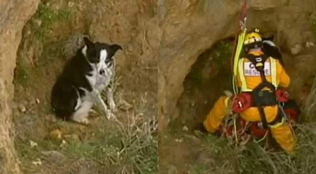 Jimmy the dog had to be rescued from a ledge on a cliff in Australia (Victoria Country Fire Authority/AP)