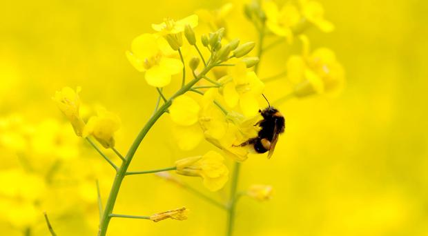 There has been an alarming drop in bee populations in recent years (PA)