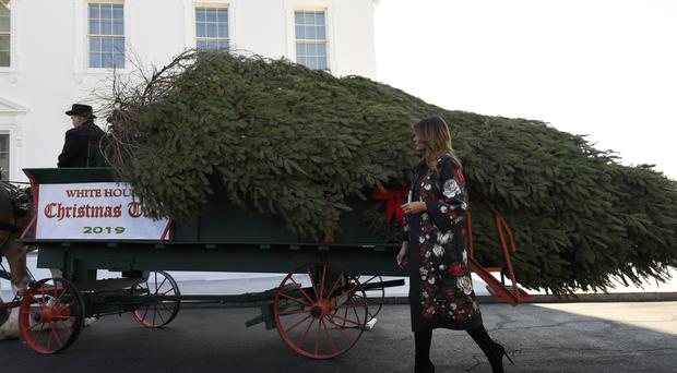 First lady Melania Trump looks over the 2019 White House Christmas tree as it is delivered to the White House in Washington, Monday, Nov. 25, 2019. The Douglas fir is approximately 23 feet tall and was grown by Larry and Joanne Snyder at Mahantongo Valley Farms in Pennsylvania. Since 1966, the National Christmas Tree Association has held a contest that awards its winner with the honor of presenting their tree to the first family and will serve as a centerpiece for Christmas decorations in the Blue Room of the White House. (AP Photo/Susan Walsh)