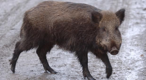 The coroner ruled that Christine Rollins bled to death after an attack by wild boar (Barry Batchelor/PA)