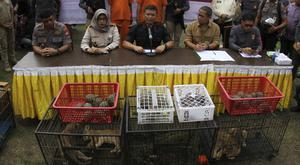 Police speak to the media as smuggled animals, including lion and leopard cubs are displayed during a press conference (Rifka Majjid/AP)