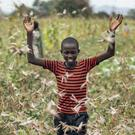 A farmer's son raises his arms as he is surrounded by desert locusts while trying to chase them away from his crops in Kenya (Ben Curtis/AP)