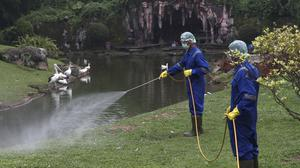 A worker sprays disinfectant at a pelican enclosure at a reptile park in Jakarta, Indonesia (AP)