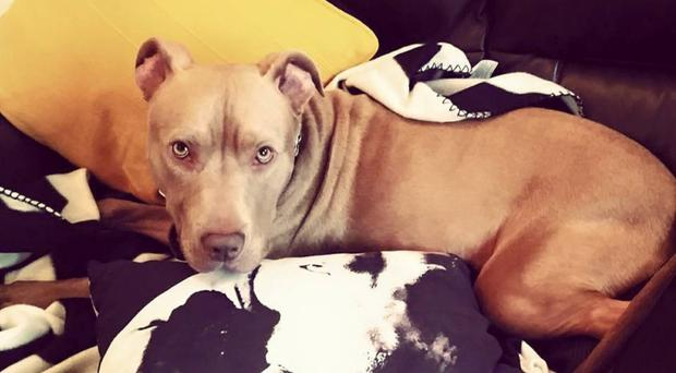 Dog Hank could end up being put down