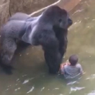 Harrowing image: Harambe the gorilla with the four-year-old boy in Cincinnati Zoo