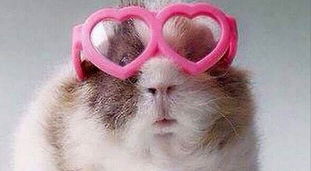 Pure cringe: the picture of a guinea pig that First Minister Arlene Foster posted recently