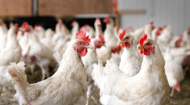 Fowl play: there are health concerns over imported US chicken