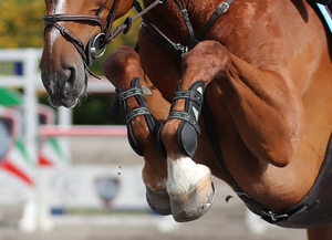 Newry and Londonderry showjumpers, Lorcan Gallagher and Jordan Coyle, showed their class in Tryon, North Carolina by claiming two major classes