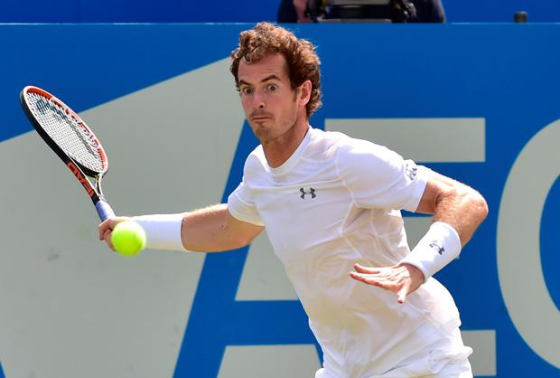 Top gear: Andy Murray turns up the heat on his way to victory over Spain's Fernando Verdasco at the Aegon Championships