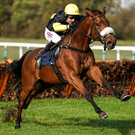 In running: Harry Skelton on board Denmead at Huntingdon