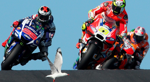 A seagull interrupted the Australian MotoGP