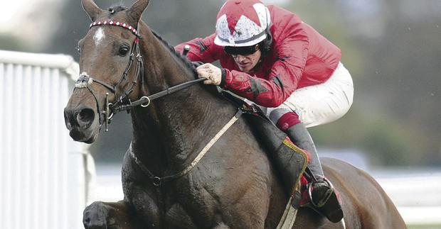 Champion material: The New One, on way to beating Rock On Ruby, is great bet in Champion Hurdle