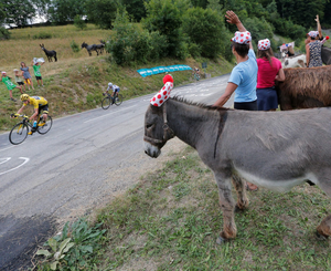 Animal instincts: Italy's Vincenzo Nibali passes spectators with donkeys during the 19th stage of the Tour de France