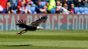 Crystal Palace are using garlic to treat the turf at their Selhurst Park home