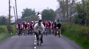 Bemused cyclists keep their distance from the stallion after it leaped over a fence onto the road