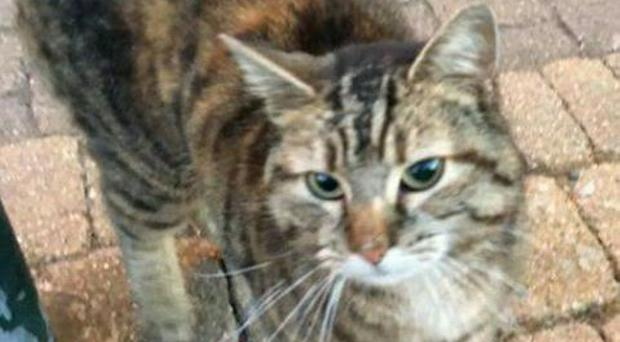 Angel the cat, who was found by an animal rescue centre