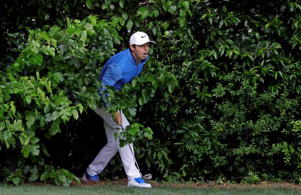 Bushtucker trial: Rory McIlroy watches his shot from behind bushes on the fourth hole yesterday